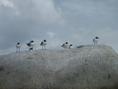 Seagulls on rock near the Baths   (Jul 04, 2002, 11:01am)