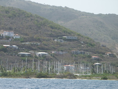 Forest of masts in Road Town, Tortola   (Jul 04, 2002, 02:54pm)
