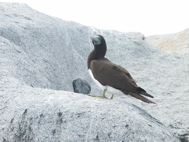 <b>Brown Booby keeps an eye on our kayak</b>   (Jul 04, 2002, 10:50am)