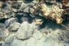 <b>Squirrelfish at Christmas Cove</b>   (Jul 05, 2002, 03:00pm)