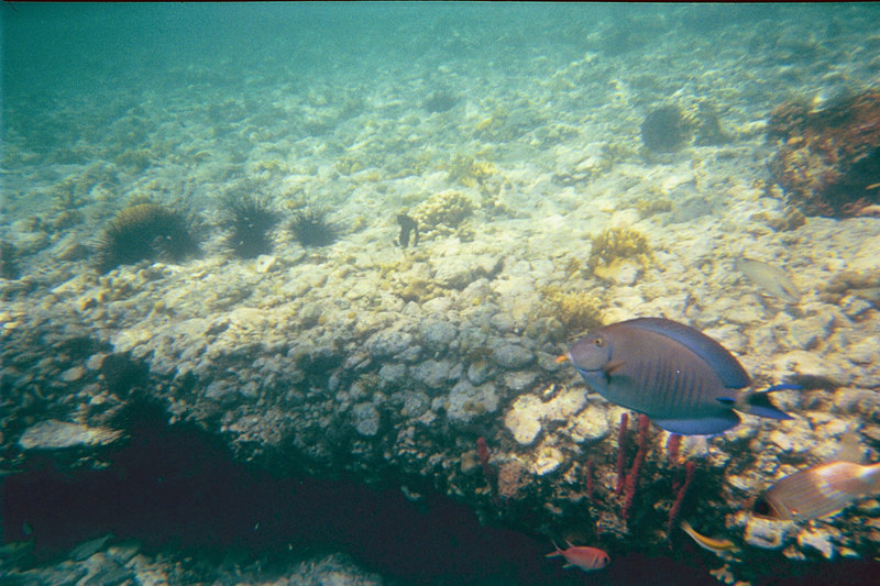 <b>Blue tang and squirrel fish at Christmas Cove</b>   (Jul 05, 2002, 03:00pm)