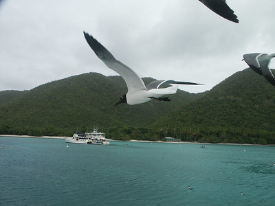 Close up of hungry seagull in flight   (Jun 29, 2002, 04:53pm)