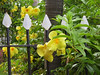 <b>Flowers and fence at 1829 Hotel</b>   (Jun 29, 2002, 07:48am)