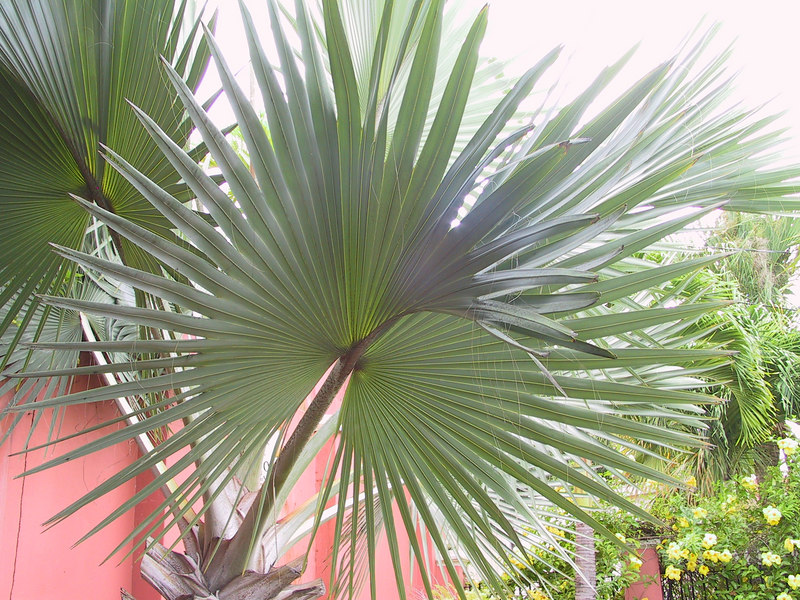 <b>Patterns of Palm frond</b>   (Jun 29, 2002, 07:31am)