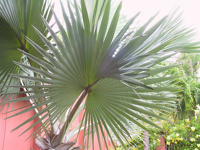 Patterns of Palm frond   (Jun 29, 2002, 07:31am)