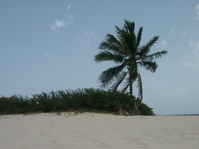The lone palm tree on Green Cay   (Jun 30, 2002, 11:43am)