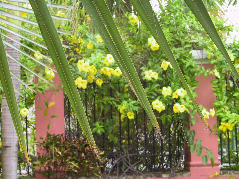 <b>Close-up of palm fronds against 1829 gardens</b>   (Jun 29, 2002, 07:32am)