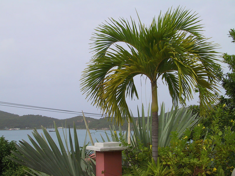 <b>Charlotte Amalie harbor seen from 1829 hotel pa</b>   (Jun 29, 2002, 07:35am)