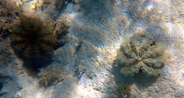 Upsidedown Jellyfish   (Dec 25, 2000, 10:30am)