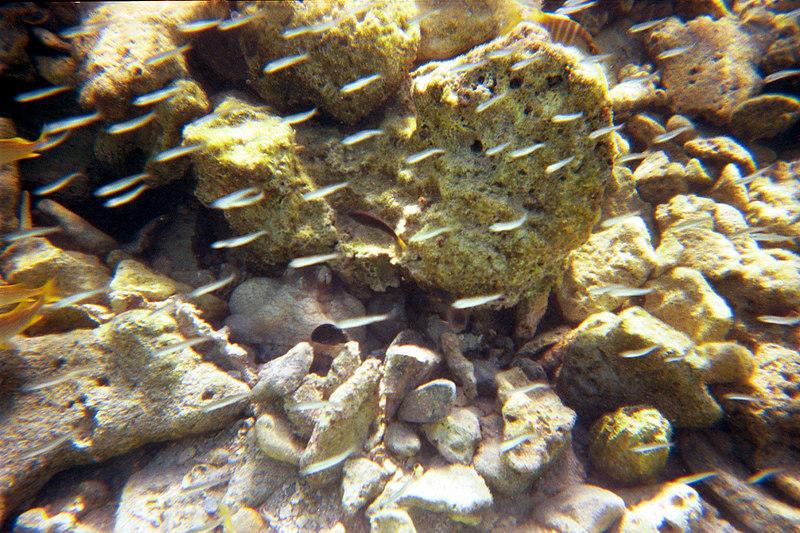 <b>Octopus Breathing</b>   (Dec 25, 2000, 10:30am)