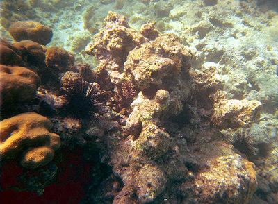 Coral Formation   (Dec 25, 2000, 02:00pm)