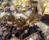 <b>Trumpetfish</b>   (Dec 25, 2000, 02:00pm)