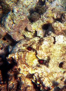 Coral Anemone   (Dec 25, 2000, 02:00pm)
