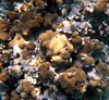<b>Coral Formations</b>   (Dec 26, 2000, 11:30am)
