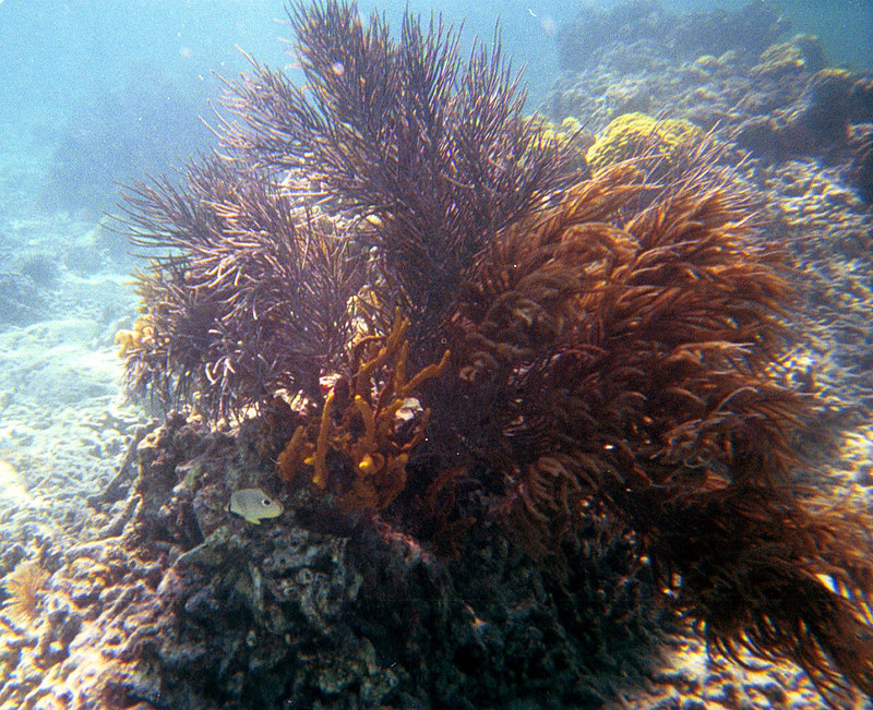 <b>Coral and Butterflyfish</b>   (Dec 26, 2000, 11:30am)