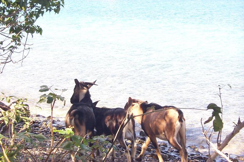 <b>Wild Goats</b>   (Dec 26, 2000, 01:00pm)