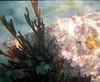 <b>Coral</b>   (Dec 28, 2000, 12:00pm)