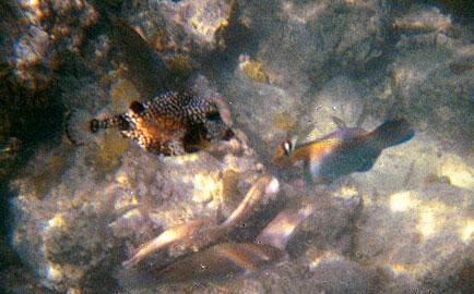 <b>Trunkfish</b>   (Dec 28, 2000, 12:00pm)