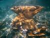 <b>Elkhorn Coral</b>   (Dec 28, 2000, 12:00pm)