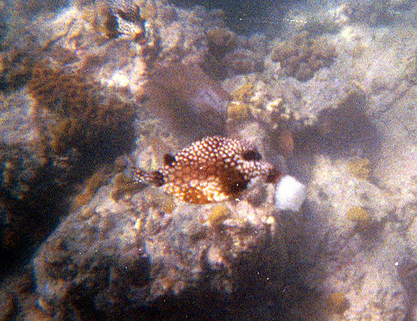 <b>Trunkfish Eating Bread</b>   (Dec 28, 2000, 12:00pm)