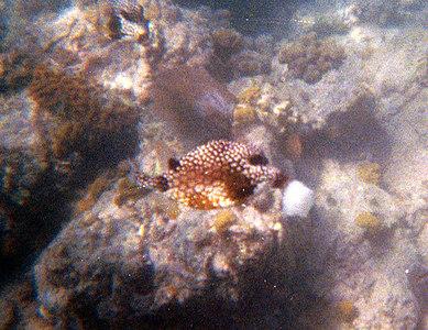 Trunkfish Eating Bread   (Dec 28, 2000, 12:00pm)