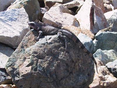 Iguana   (Dec 29, 2000, 01:19pm)