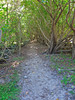 Path Around Waterlemon Bay, St John
