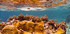 Coral Formation, Lamshur Bay, St John