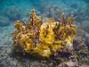 Coral Formation in the waters off Hassel Island, St Thomas