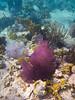 Coral around Waterlemon Cay, St John