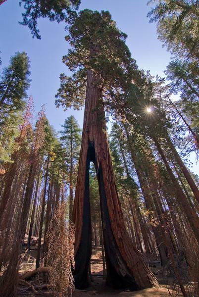 <b>The Clothespin Tree</b>   (Sep 16, 2007, 10:05am)