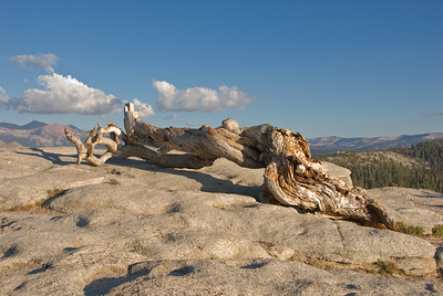 Famous dead jeffrey pine on top of Sentinel Dome   (Sep 16, 2007, 05:07pm)