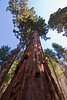 <b>Top of the Clothespin Tree</b>   (Sep 16, 2007, 10:05am)