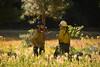 <b>Firemen discussing the meadow burn</b>   (Sep 18, 2007, 09:37am)