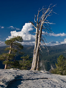 Dead trees on Sentinel Dome   (Sep 16, 2007, 04:04pm)