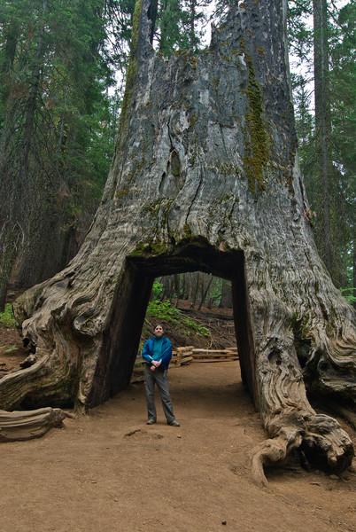 <b>Daphne in tunnel through giant sequoia</b>   (Sep 19, 2007, 09:46am)