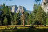 <b>Dead tree and meadow in Yosemite Valley</b>   (Sep 18, 2007, 08:37am)