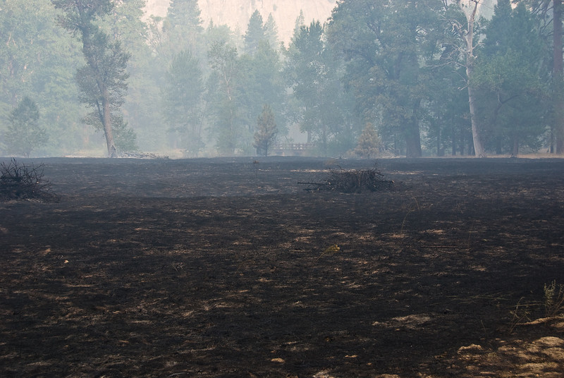 <b>Meadows after the burn</b>   (Sep 19, 2007, 08:23am)