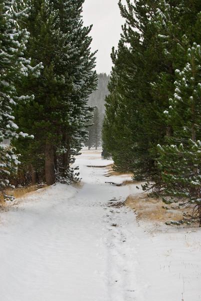 <b>Path through Tuolumne Meadows</b>   (Sep 20, 2007, 08:14am)