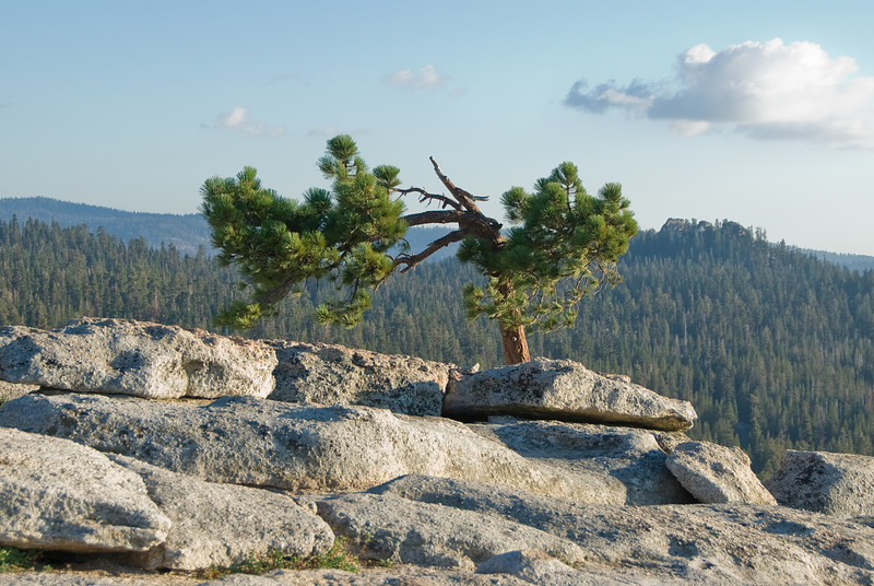 <b>Tree seen from Sentinel Dome</b>   (Sep 16, 2007, 05:07pm)