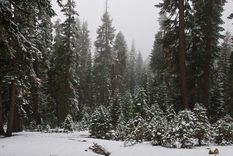 <b>Snow covered trees</b>   (Sep 20, 2007, 10:20am)  Along Tioga Road