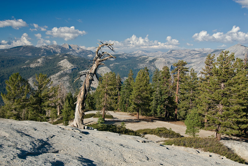 <b>Dead tree from slope of Sentinel Dome</b>   (Sep 16, 2007, 04:03pm)