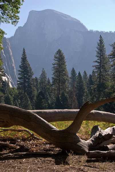 <b>Half Dome and Trees</b>   (Sep 18, 2007, 08:30am)  An interesting shot of a dead tree and Half Dome during the photography hike.