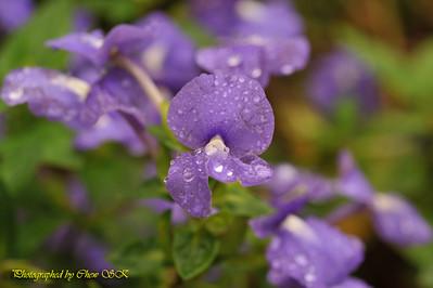 Botanical Garden (23/09/2008)