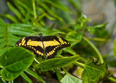 Butterfly World  12/2011