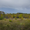Kirby Storter Roadside Park, Big Cypress