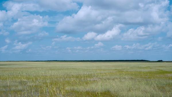Everglades mixxed