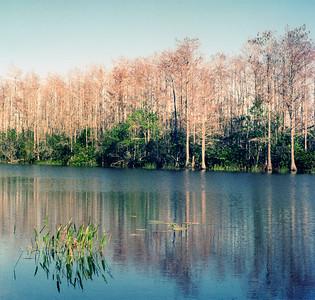 Grassy Water