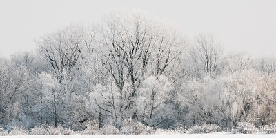 Frozen Fog clinging on to Trees in Woods