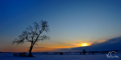 Lone tree in the snow at sunset